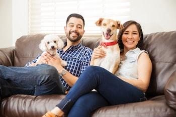ForeFront Property Management Pet Application